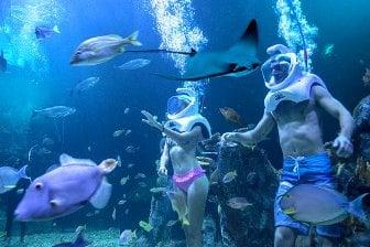Aquarium Cancún todo incluido
